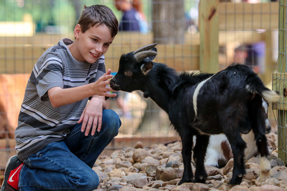 Boy Feeds Goat At Big Al's Farm